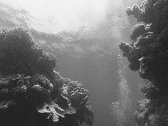Bait Reef Great Barrier Reef   #australia #exploreaustralia #diving #underwater #nature #coral #queensland #greatbarrierreef #vsco #vscocam #vscotravel #gopro #goprooftheday #instagood #instadaily by becellul http://ift.tt/1UokkV2
