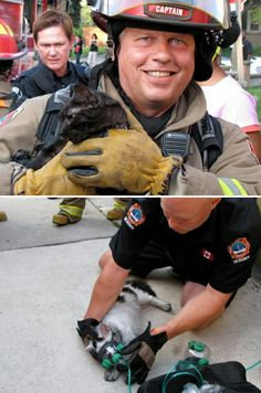 Toronto firefighters rescue and resuscitate two cats found in a smoke-filled burning house. | Shared by LION