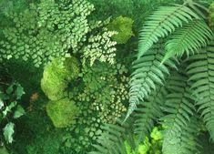 www.milanuncios.com plantas musgo-cesped-artificial-223729458.htm