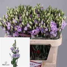 Eustoma Lisianthus dbl. Rosita Lavender - 2018 Wedding Trend: Ultra Violet Purple. For lilac and purple wedding flowers to suit your colour scheme, visit our website at www.trianglenursery.co.uk/fresh-flowers!