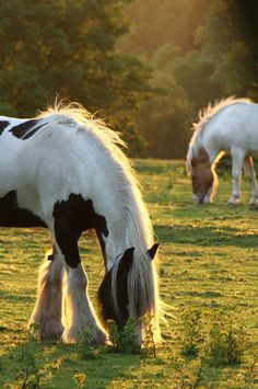 Country Living ~ magnificent horses