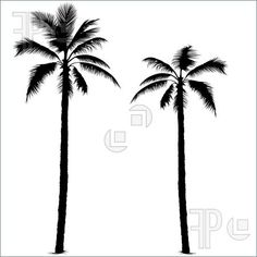 Illustration of Palm tree silhouette 1 - Highly detailed black silhouette