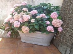 Hortensias Floral Wreath, Wreaths, Plants, Home Decor, Gardens, Hydrangeas, Floral Crown, Decoration Home, Door Wreaths