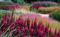 despite vivid color, soft sweeps create a romantic & tranquil landscape