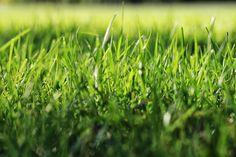 Grass by Jevgeni Blinov on 500px