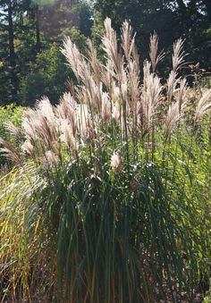 Ziergräser sehen toll in jedem Garten aus. Doch welches passt in deinen Garten? Finde hier sieben wunderschöne Gräser und Pflegetipps.