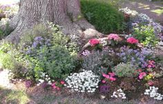 planting under trees.....good tips to make a pretty display of colour.