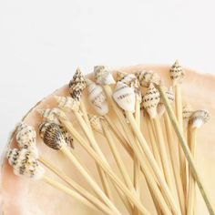 Party Shell Toothpicks And Shell Holder