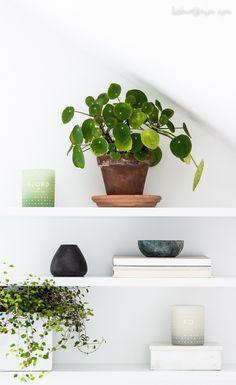 Fensterbank Dekoration   57 Ideen, Wie Sie Das Potenzial Der Fensterbank  Entdecken | Pinterest | Cacti, Gardens And Room