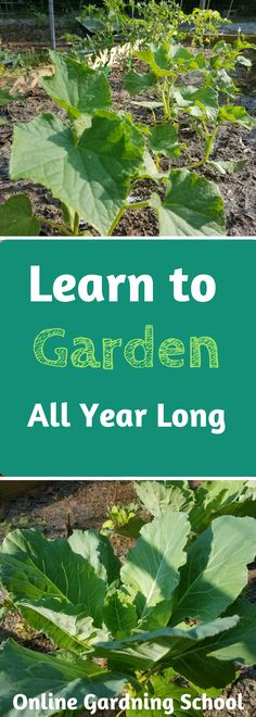 #ad Learn how to garden year round with Rick Stone will teach you how to grow a garden a year long, with his 18 years of gardening experience! His no nonsense way of teaching is super simple to follow.