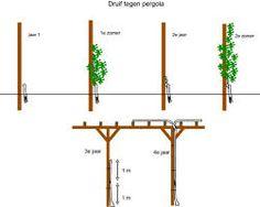 Afbeeldingsresultaat voor pergola druif