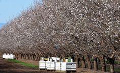 albine-migdale z resize Pergola, California, Outdoor Structures, Outdoor Pergola