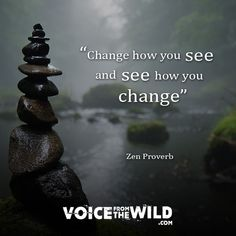 """""""Change how you see and see how you change"""" ~ Zen Proverb"""