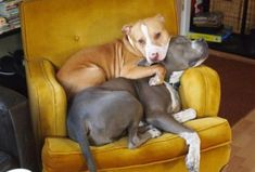 Dogs that have no concept of personal space