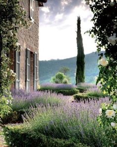 Provence lavender season travel to средиземноморский сад, ла The Secret Garden, Lavender Garden, Provence Lavender, French Lavender, Lavender Hedge, Lavender Ideas, Lavender Cottage, Italian Garden, Tuscan Garden