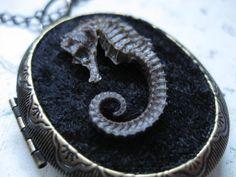 Taxidermy Seahorse Locket Necklace