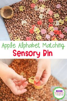 This free Apple Alphabet Sensory Bin is great for bringing some hands-on fall fun to identifying uppercase and lowercase letters! Apple Activities Kindergarten, Autumn Activities For Kids, Sensory Bins, Sensory Activities, Sensory Play, Learning Letters, Kids Learning, Lower Case Letters, Apple Center
