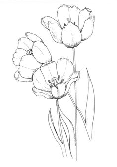 Illustration by: Kris Peek. To see more, go to. Illustration by: Kris Peek. To see more, go to: www. Flower Art Drawing, Flower Line Drawings, Flower Drawing Tutorials, Botanical Line Drawing, Flower Sketches, Floral Drawing, Botanical Drawings, Art Drawings Sketches, Painting & Drawing