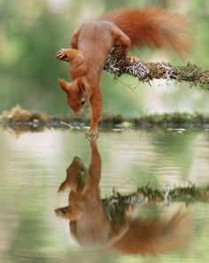 20 Hilarious Snapshots of Squirrels and Foxes to Brighten Your Day