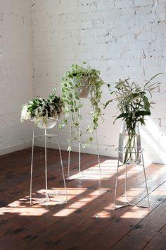Grønne planter på stativer