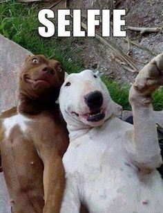 Two dogs taking a picture