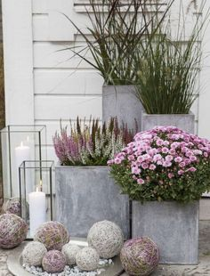 Gardening Autumn - Pixel - With the arrival of rains and falling temperatures autumn is a perfect opportunity to make new plantations Big Planters, Concrete Planters, Front Door Planters, Fall Planters, Modern Planters, Outdoor Planters, Plants For Front Door, Flowers In Planters, Outdoor Potted Plants
