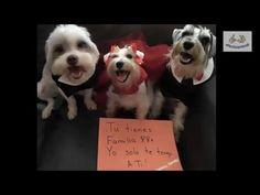 Perros: maneras de dormir y su personalidad - Afecto Animal. - YouTube