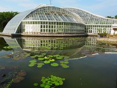 度々行きたい旅。: 京都観光:京都府立植物園・日本最大級の観覧温室です!