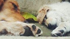 Naps ♡