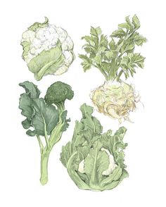 "Winter Vegetables Illustration Reproduction 8"" x 10""- Farmer's Market Wall Art"