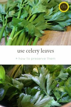 Is it safe to eat celery leaves raw? Celery leaves are more nutritious and they are easy to preserve. Learn how to dry celery or freeze celery leaves. How To Store Celery, How To Freeze Celery, Freezing Celery, Freezing Vegetables, Healthy Fruits And Vegetables, Veggies, Celery Plant, Broccoli Leaves, Celery Recipes