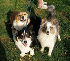 One dog #smiling is great, but 3 #dogs are the bomb!  www.beaumontfamilydentistry.com
