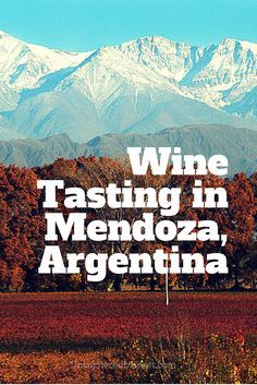 Wine Tasting in Mendoza, Argentina: Going Beyond Malbec and Loving It