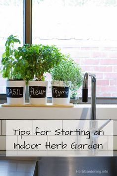 Tips for Starting an Indoor Herb Garden. Get easy access to fresh herbs all year long with these simple herb gardening tips.