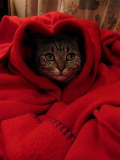 Kitty knows how to be cozy... <3