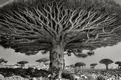 """Beth Moon, Heart of the Dragon, from the series """"Island of the Dragon's Blood"""""""
