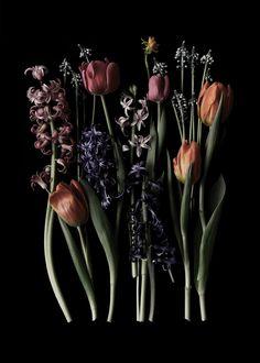 signs of spring  | STILL  (mary jo hoffman)