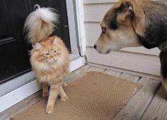 10 astuces pour faciliter la cohabitation entre un chien et un chat