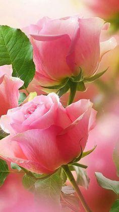 ROSITA may te oblidare 11/11/16 epd amb dolor i amor jordi Ruzafa Biayna. - Idyllic Gardens