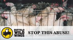 Petition · Buffalo Wild Wings: Buffalo Wild Wings stop selling eggs from battery cages · Change.org