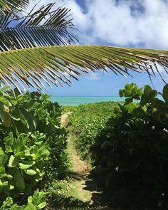 Things to do on O'ahu, Hawaii🌸 Beach Trip, Beach Travel, Kailua Beach, Stuff To Do, Things To Do, Oahu Hawaii, Travel Tips, Plant Leaves, Places