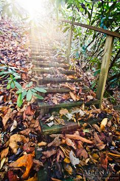 Spiritual Nature Photography, Stairway to Heaven Fine Art Photo PRINT Lost Places, Stairs in Forest, Path Photo, Spiritual Wall Decor Hiking by MelaLuna on Etsy https://www.etsy.com/listing/170939592/spiritual-nature-photography-stairway-to