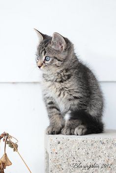 I grew up with cats. This little fur baby is totally adorable!