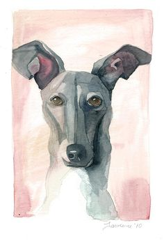 Italian Greyhound Painting  - Italian Greyhound Fine Art Print
