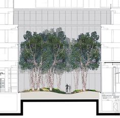 Image 19 of 27 from gallery of The New York Times Building Lobby Garden / HM White Site Architects + Cornelia Oberlander Architects. east west section