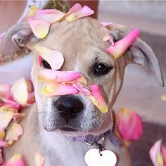 Spring Forward! - The Lazy Pit Bull