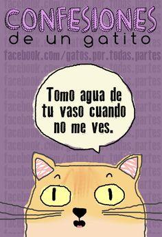 Cuando no me ves #cats