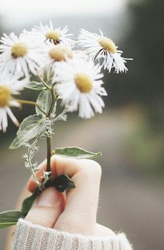 ideas nature pictures inspirational for 2019 Love Flowers, Vintage Flowers, Wild Flowers, Beautiful Flowers, Fresh Flowers, Flower Aesthetic, Jolie Photo, Flower Wallpaper, Nature Pictures