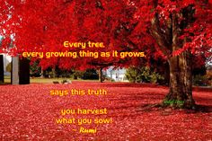 """Every tree, every growing thing as it grows,  says this truth . . . you harvest what you sow!""  ~ Rumi"