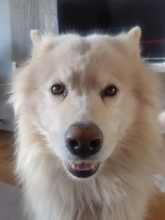 Mars 2019 Mixed Breed, Mars, Husky, Dog, Animals, Diy Dog, Animales, March, Animaux
